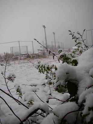 初雪(2008年11月)