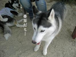 09.06愛ハス10