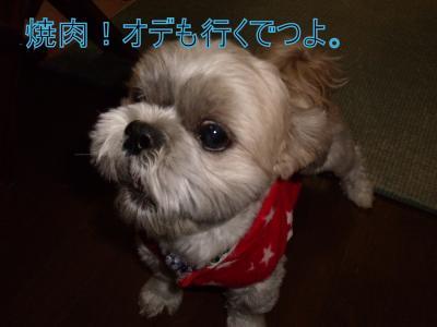 繝・ず繧ォ繝。+730_convert_20100106024318