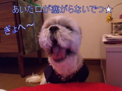 akinohini14.jpg