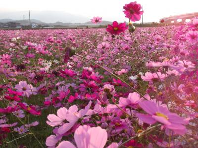 funakoshi-kosumo2jpg.jpg