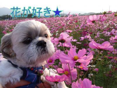 funakoshi-kosumo3jpg.jpg