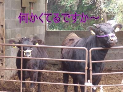 koushi.jpg