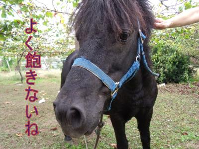 wagahai1.jpg