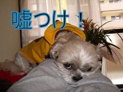 wagahai2.jpg