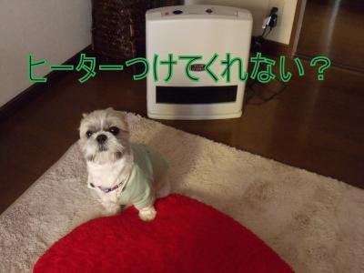 wagahai5.jpg