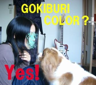 gokigoki.jpg