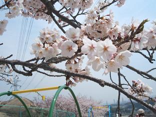 2008.お花見 001