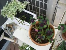 garden1020-clover.jpg