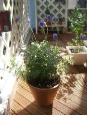 garden1020-lavender.jpg