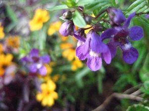 秋のお花 003