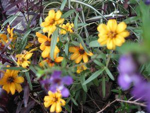 秋のお花 004