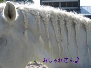 三つ編み 白馬 023