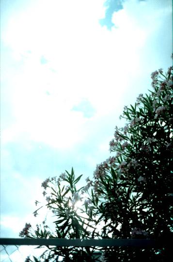 20061129175648.jpg