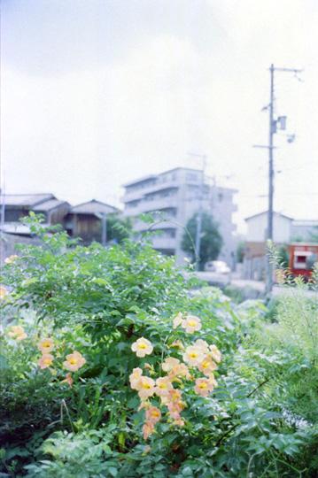 0          blog1999