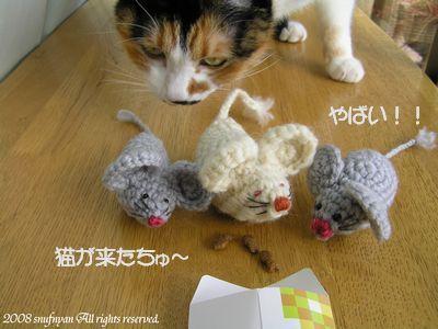猫がきたちゅ~