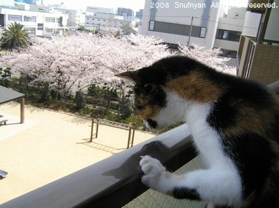 桜より気になるものが・・・