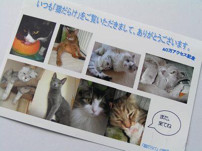 猫だらけポストカード