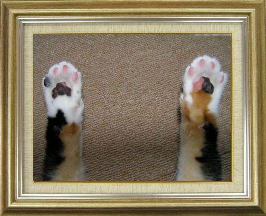 ねこ 猫 肉球祭り 01番
