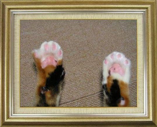 ねこ 猫 肉球祭り 02番