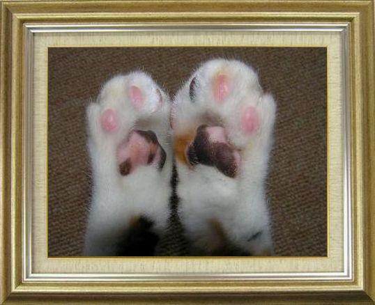 ねこ 猫 肉球祭り 03番
