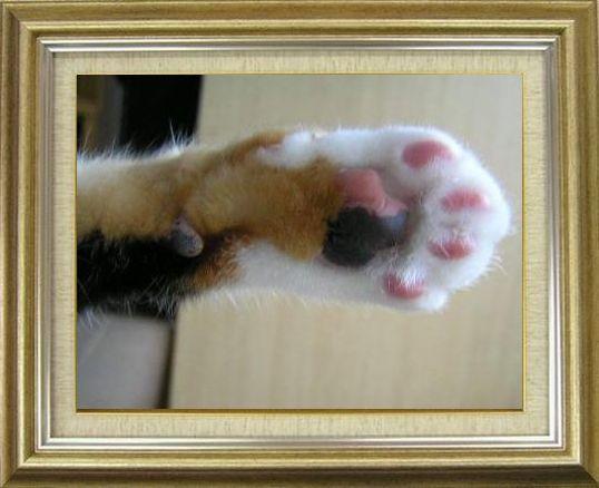 ねこ 猫 肉球祭り 07番