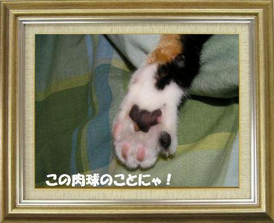 ねこ 猫 肉球祭り 08番