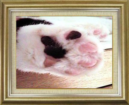 ねこ 猫 肉球祭り 09番