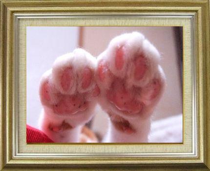 ねこ 猫 肉球祭り 10番