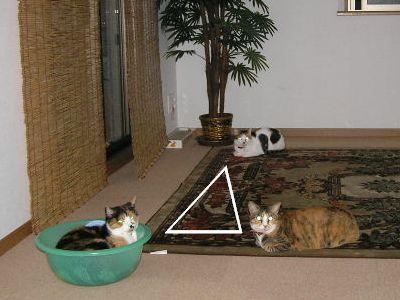 猫(にゃ)等辺三角形