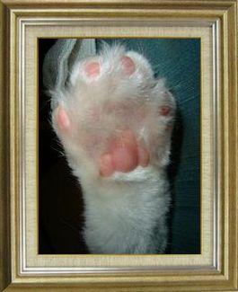ねこ 猫 肉球祭り 11番