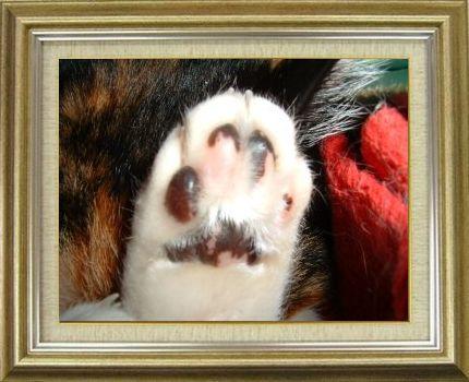 ねこ 猫 肉球祭り 12番