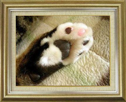 ねこ 猫 肉球祭り 13番