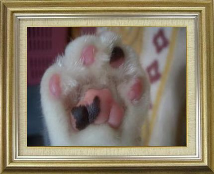 ねこ 猫 肉球祭り 14番