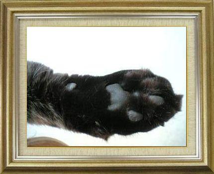 ねこ 猫 肉球祭り 17番