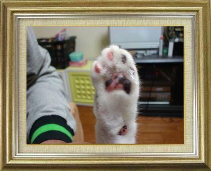 ねこ 猫 肉球祭り 18番