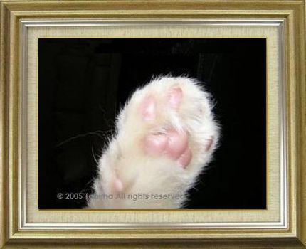 ねこ 猫 肉球祭り 19番