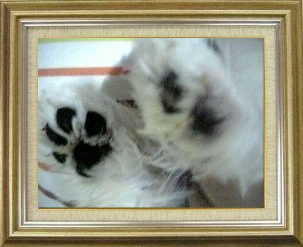 ねこ 猫 肉球祭り 20番