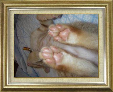 ねこ 猫 肉球祭り 22番