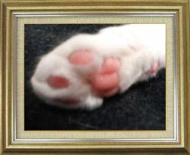 ねこ 猫 肉球祭り 25番