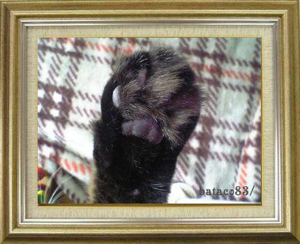 ねこ 猫 肉球祭り 26番