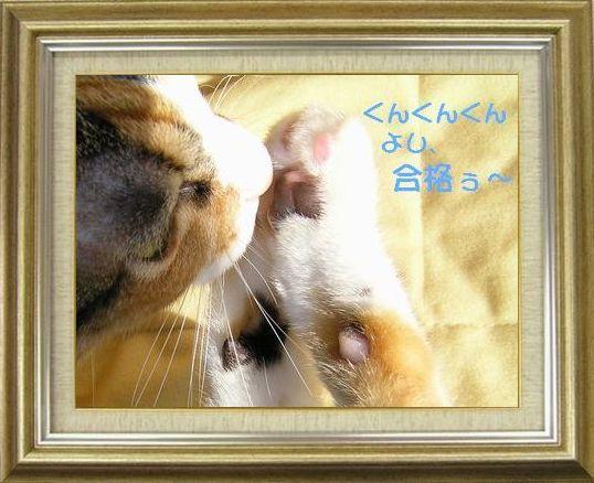 ねこ 猫 肉球祭り 27番