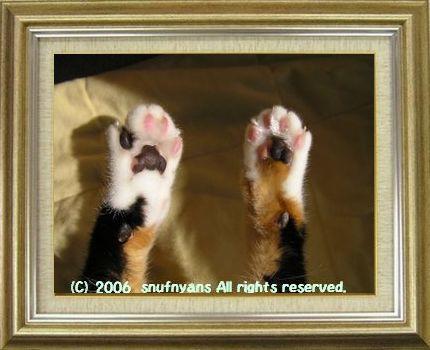 ねこ 猫 肉球祭り 28番
