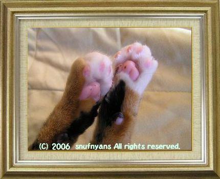 ねこ 猫 肉球祭り 29番
