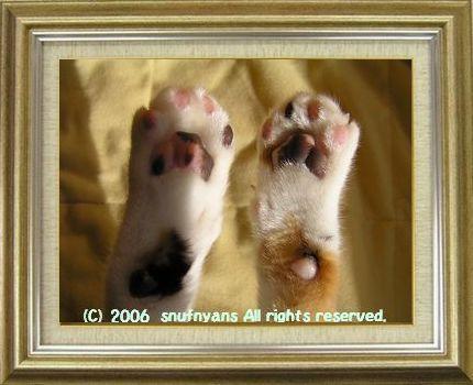 ねこ 猫 肉球祭り 30番