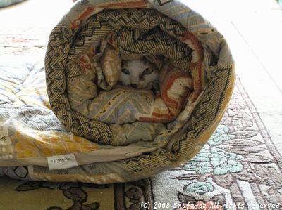 また猫が・・ これぞまさしく猫太郎飴