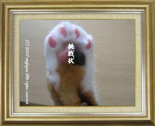 ねこ 猫 肉球祭り 31番