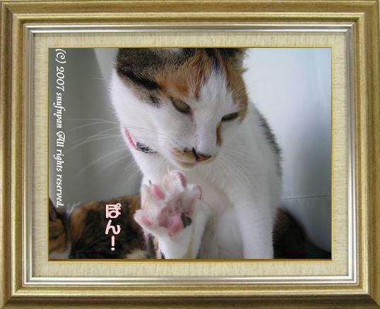 ねこ 猫 肉球祭り 32番