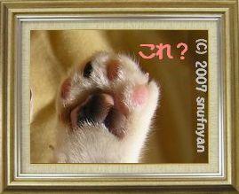 ねこ 猫 肉球祭り 33番