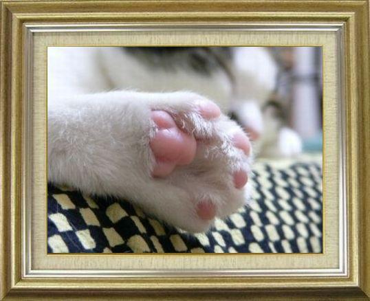 ねこ 猫 肉球祭り 34番